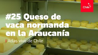 #25 Queso de vaca normanda en la Araucanía - Atlas Vivo de Chile