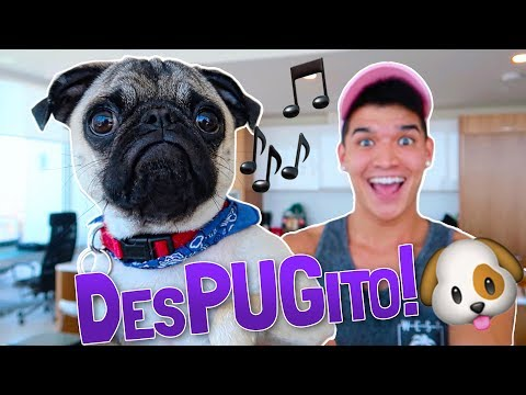PUPPYS NEW SONG!! DesPUGito