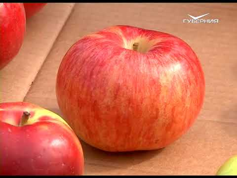 Осенние сорта яблок. Удачные заметки