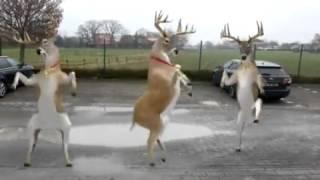 Canción de Navidad graciosa