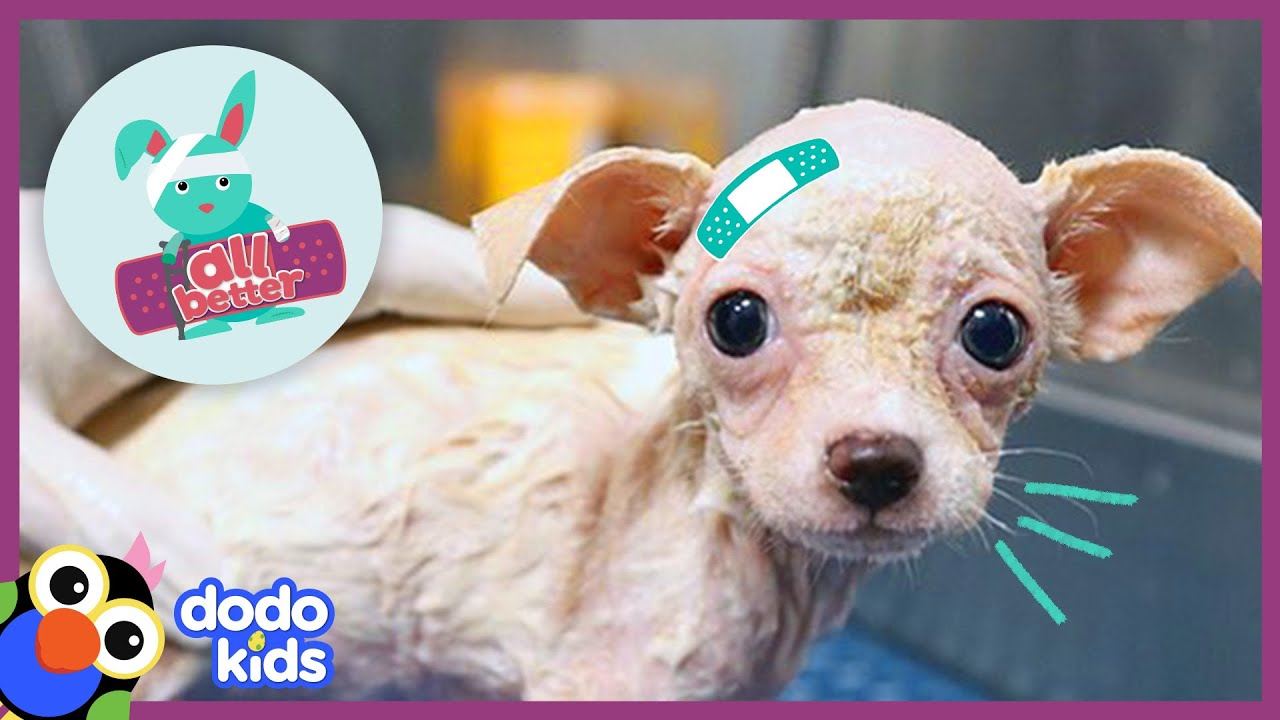 All Better Pippa — Pup Without Fur Is Feeling Like A Dog Again | Animal Videos for Kids | Dodo Kids