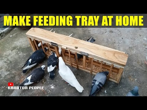 How To Make Pigeons Feeding Tray At Home Homing Birds Food Bird