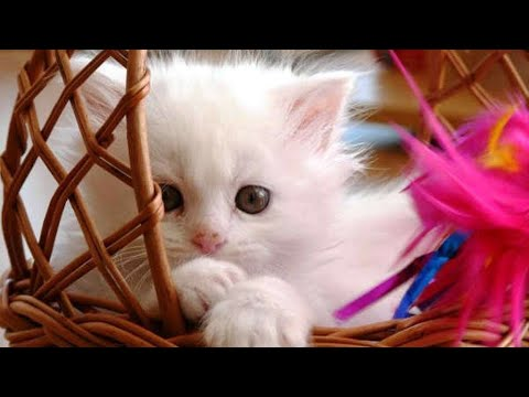 Tik Tok Dogs And Cats Cute Cat Funny Video 2 Playing Funny Cat Whatsapp Status Cool Cute Whatsapp Status