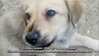 Штраф за доброту: зоозащитница заплатит за оскорбление ударившего собаку