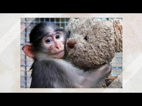 Прикольные обезьянки подборка смешных картинок