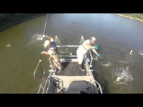 Michigan DNR Asian Carp Training - Illinois River 2015