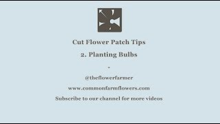 Cut Flower Patch Tips - 2. Planting bulbs