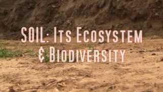 SOIL : ECOSYSTEM & BIODIVERSITY | By ARMAAN PAUL  & RAUNAQ DEV | The students of DPS Ludhiana |