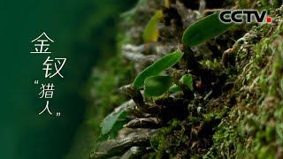《金钗猎人》生命的博弈:伏牛山深处的猎人们 | CCTV纪录