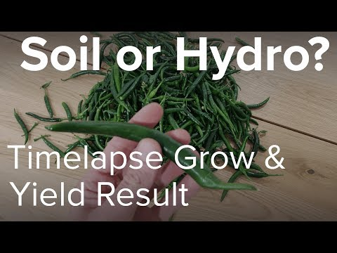 Soil Vs Hydro Yield Result and Timelapse Video
