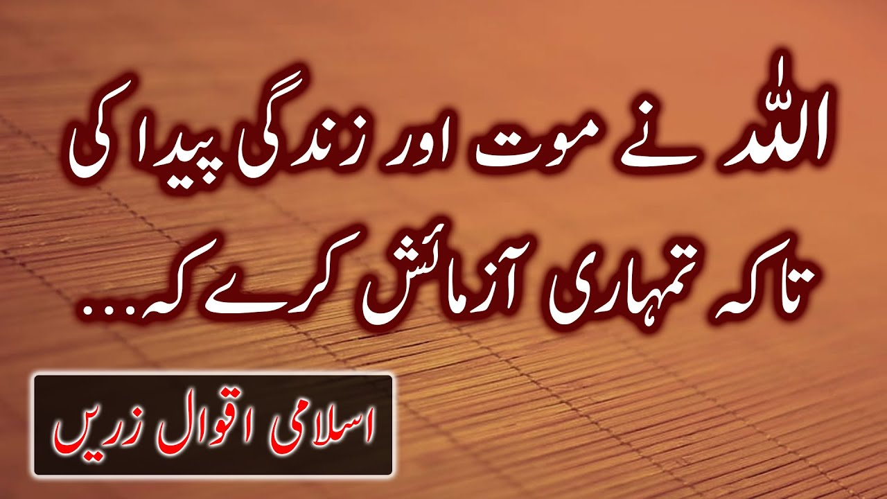 Best Collection of Islamic Quotes About Allah And His Mercy | Best Heart Touching Quotes in Urdu