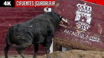 Imagen del video:  TOROS IMPRESIONANTES EN CIFUENTES (GUADALAJARA) Certamen de recortes / LA CARDENILLA & MONTECILLO