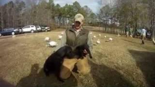 Wildrose Kennels - Picking Up Murph The Labrador Puppy