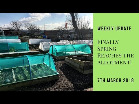 Spring Finally Arrives At The Allotments