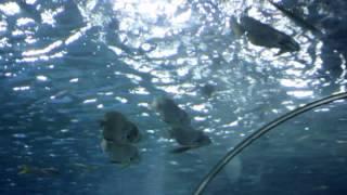 Manila Ocean Park Oceanarium, Marine Life Exhibit