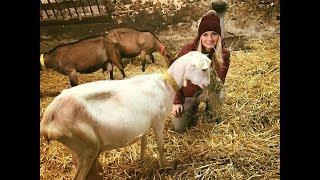 Les Animaux de la 8 Des animaux made in Normandie