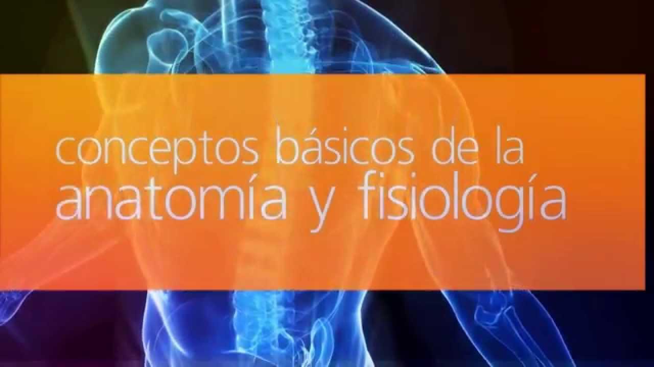 Anatomía y fisiología humana - YouTube