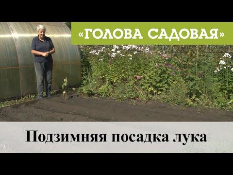 Голова садовая - Подзимняя посадка лука