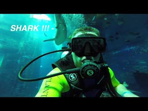 Atlantis The Palm Dubai – Predator dive – Dolphin Encounter – Helicopter.