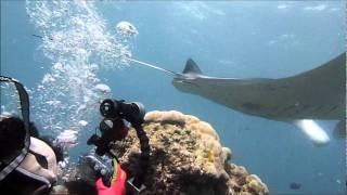ヤップダイビングツアー2011 サザナミマリンダイビングスクール ヤップ島 検索動画 22