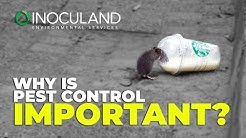 Why is pest control important?  Inoculand Ltd Pest Control