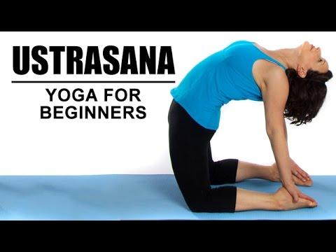 ustrasana  camel pose  yoga for beginners  youtube