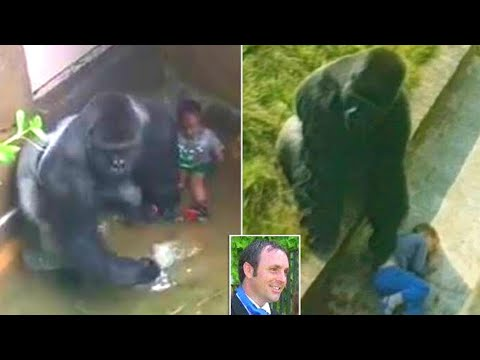 He Fell Into a Zoo's Gorilla Pit When He Was Five  But What Happened Was Incredible