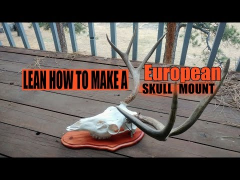 How To Make A Deer European Skull Mount