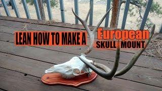 How To Make A Deer European Skull Mount