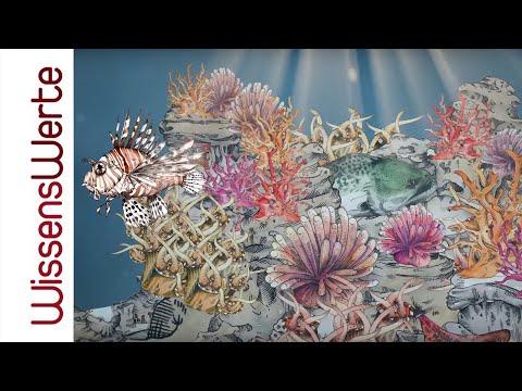 WissensWerte: Meere und