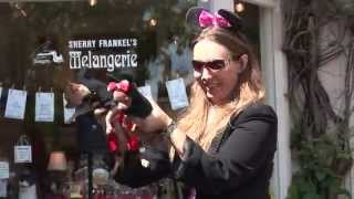 ICTV1 PALM BEACH PET PARADE VIA AMORE WORTH AVENUE PALM BEACH FLORIDA 33480 AND BIG DOG RANCH