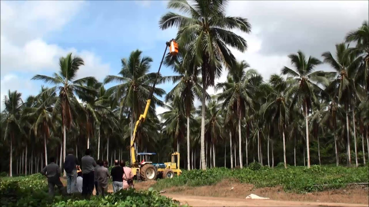 the coconut keeps rp economy from The gdp and its importance by elvis picardo, cfa | updated it does not account for the underground economy – gdp relies on official data.