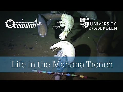 Life in the Mariana Trench video