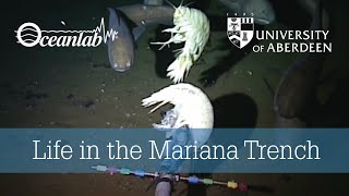 Life in the Mariana Trench