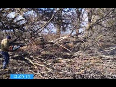 ТРК ВіККА: Минулої доби сильний вітер на Черкащині знеструмлював села й «деревопадив»