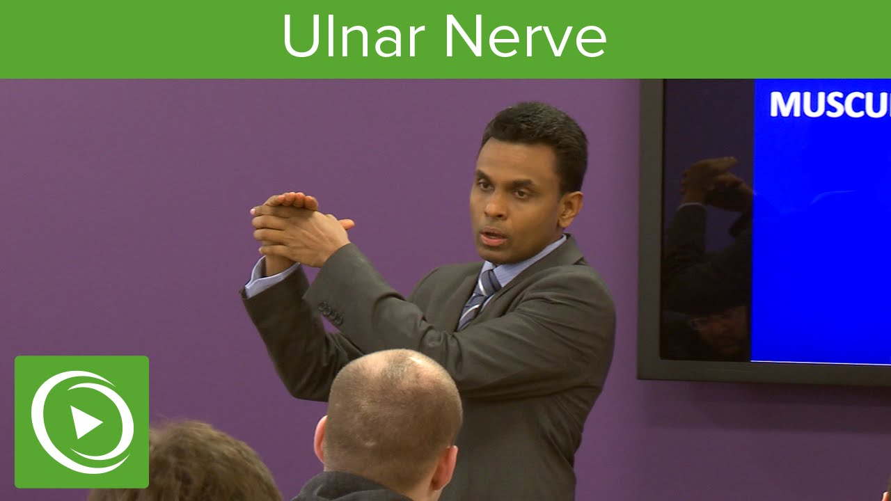 Muscles of the Ulnar Nerve  – MRCS | Lecturio