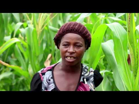 Integrated Fish Farming and Irrigation Project   Malawi