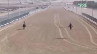Al Wathba CEI 100 km 8 dec 2018 Endurance Race