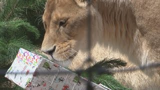 Christmas comes early for residents at Christchurch's Orana Wildlife Park
