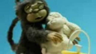 stupid monkey sex on the beach
