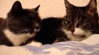 Коты поют очень грустную песню(( [Music]