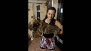 ЛИРИКУМ Жули де Саваж - кошка мейн-кун 3 года - на конкурс кастратов