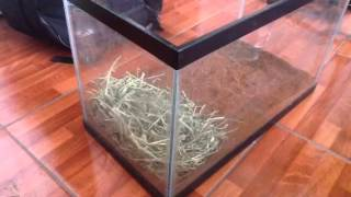 How to set up your tortoise habitat