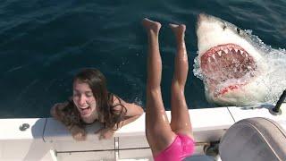 ЕЛИ СПАСЛИСЬ Встречи с акулами которые люди запомнят на долго Выжили после встречи с акулой и сняли