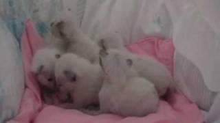 Katzenbabys, Babycats