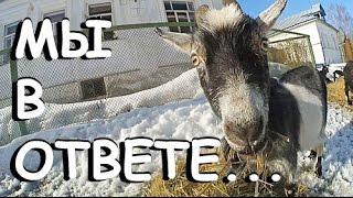 Животные и ОТВЕТСТВЕННОСТЬ хозяев. ШОК, смотреть всем козоводам и не только! It's My Life! 27