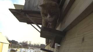 Кот зимой живет в будке