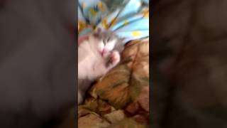 Просто странно спящий котёнок))
