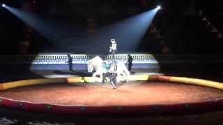 Arabian Nights Black Stallion Dinner Show Performance Thumbnail