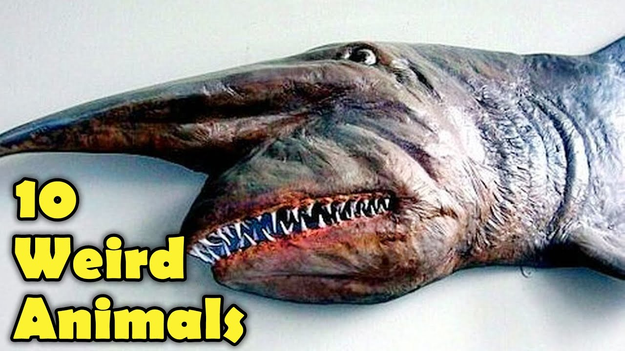 10 WEIRD ANIMALS YOU DON'T THINK ARE REAL!